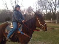 Gunner is a approx. 9 year old gelding quarter horse