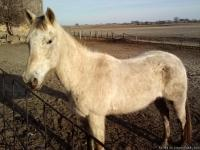 Misty is a horse that needs an experienced rider. She