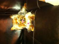 I have a very spunky and fun yorkie is nt shy at all