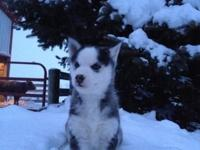 I have 3 charming young puppies who are looking for a