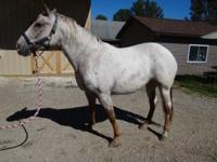 April is a gorgeous little mare! She has recently come