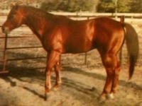 AQHA stud out of Flame Thrower and Fantastic Fanale.