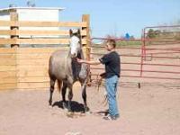 2002 AQHA, 15.1h, Gray mare: Blue Go Gal reg.#4430964.