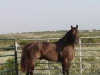 i have a 11 year old blue roan stallion for sale. he is