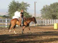 5 yr old, AQHA Reg, Gelding, Sorrel with minimal white.