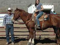 AQHA HORSE FOR SALE Price: $4500.00 Type: Gelding (15