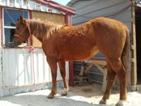 She needs a job. Incentive Fund AQHA, 2006 Mare. You