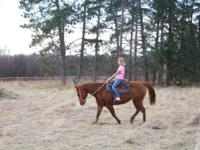 Diamond is a 12 year old mare that has been trail rode,