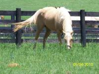Beautiful 4 year old Palomino Mare! She is so striking,