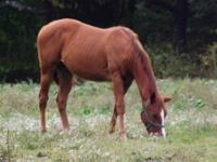I have a 7yr old Quarterhorse mare for sale..She is