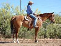 AQHA 2000, reg. #3925440, 15.3h. Nice trail horse,