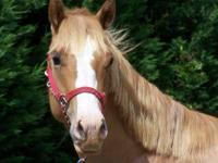RED is a gorgeous 16 h (approx) AQHA horse - with that