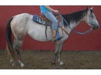 Windy Double Dash is a 4 yr old 14.1 hand gray mare.
