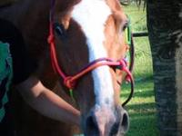 reg. AQHA gelding.Chevy has recently been retired as