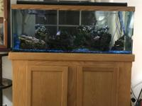 We are buying a new fish tank this Saturday. We are