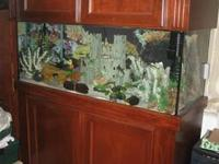 75 Gallon Aquarium. Complete Set up with fish. Lots of