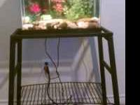 Glass aquarium and iron/metal stand (just like the