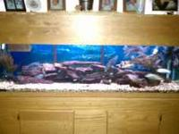 I have a 125 gal aquarium for sale ($550). Included is