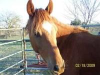 Arabian - Applejack - Medium - Adult - Male - Horse