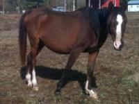 Arabian - Arwen - Medium - Adult - Female - Horse