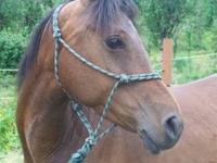 Arabian - Chance - Medium - Young - Male - Horse Hooved