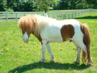 We have been breeding horses for many years and