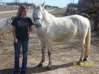 Layla is a 7 year old well behaved mare. She is the