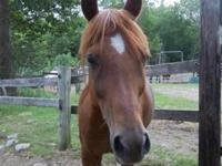 Arabian - Mariah - Medium - Adult - Female - Horse