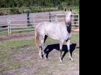 I have a 3 yrs old filly she loves attention and being