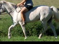 Arabian - Elenore - Medium - Senior - Female - Horse