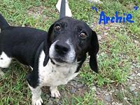 "ARCHIE's story ""ARCHIE"" about 4-5 years old - a stray"