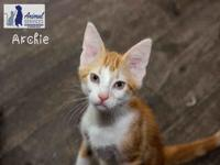 ARCHIE's story Archie is an outgoing friendly little