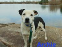 Meet Archie! He is an awesome dog needing a good home!