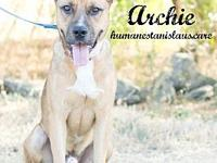 ARCHIE's story All animals available for adoption