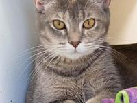 My story Ardie is an adult, spayed female cat, born in