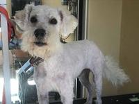 Ardor's story Adorable Ardor! He is a male Schnoodle