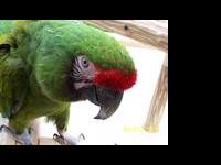 Hello!!!! ARE YOU LOOKING FOR A FRIENDLY MACAW???? I