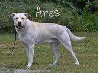 Ares's story Ares is a big boy looking for a forever