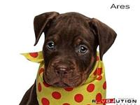 Ares's story Meet Londons seven puppies AJ, Ares, Mia,