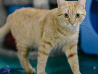 Double adoption with Franklin, #BF1453. Aretha and