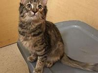 Aretha18's story All Purr Partners Adoptable Cats