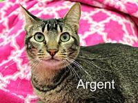 Argent's story The adoption fee is $85.00 with an