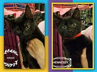 ARGUS or HENNESY's story UPDATE:Argus has been adopted