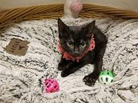 Aria's story Hello! My name is Aria #33833 and I am a