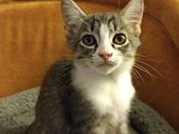 Aria18's story All Purr Partners Adoptable Cats &
