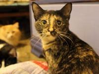 Ariadne is a shy tortoiseshell girl just waiting to