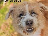 Arie's story Arie is a 4 1/2 year old Terrier mix. She