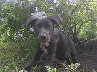 Ariel's story You can fill out an adoption application