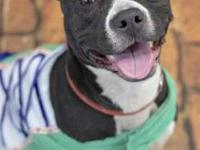 Aries's story !!! AVAILABLE for Adoption at ACCT