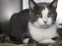 Aries is an adorable 8-month old male kitty who arrived